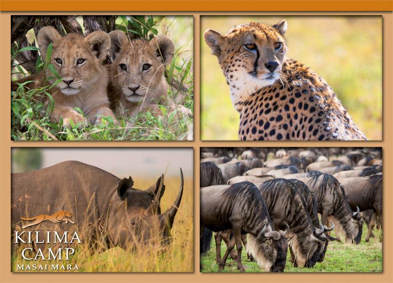 Postcard Kilima Camp 2