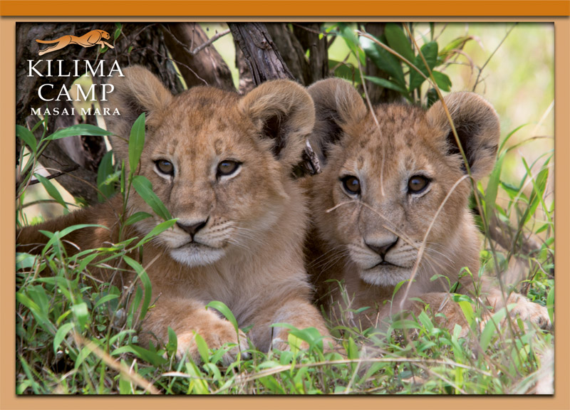 Postcard Kilima Camp 4
